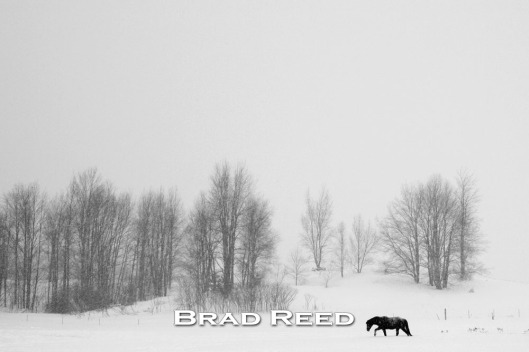 I had set out in a blustery cold January snowstorm intending to make a close-up photograph of a friend's horse. That particular horse was in a frisky mood and would not cooperate. In frustration, I turned around to leave, knowing I had not made a good photo yet that day. As I looked up, I saw this lone horse out in the distance trudging through the snow. Only having one shot left in my camera, I carefully composed this photograph just as the horse was taking a step. I did not realize it at that moment, but I believe this is one of the best photographs I have made in my lifetime.
