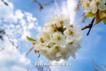 """Sweet Cherry Blossom"" — Brad Reed Using my wide-angle macro lens, I was able to get underneath this beautiful sweet cherry blossom and shoot straight up in the air. This allowed me to have a clean simple background with the clouds, blue sky, and just the tips of a few other blossoms in the distance. I set my exposure manually for the sky and then used my fill flash to brighten the blossoms. F5.6 at 1/250, ISO 100, 18-50mm lens at 18mm"