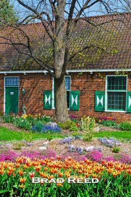 Today was my first time at Windmill Island Gardens in Holland, Michigan. The historic village near downtown replicates what life was like in the Netherlands a few hundred years ago. Each year, hundreds of volunteers help plant thousands of tulips in Holland for their annual Tulip Time festival. This year, the tulips have bloomed a month early because of the unseasonably warm weather in March. F8 at 1/200, ISO 100, 18-50mm lens at 35mm
