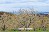 A Michigan fruit grower has probably invested a small fortune in planting and caring for this orchard, hoping it will yield dividends this year and for many years to come. My dividend today is being able to see, appreciate, and photograph these trees planted on a ridge overlooking Grand Traverse Bay. F22 at 1/80, ISO 800, 80-200mm lens at 120mm
