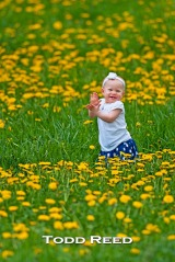 One-year-old Caly Eisenlohr stands out beautifully in a sea of dandelions. I was making an image of an orchard and the dandelions in full bloom along Pere Marquette Highway when Caly's parents, Jerrod and Tara, decided this was the perfect setting for them to take pictures of Caly and her three-year-old brother Owen. F4 at 1/320, ISO 400, 500mm lens at 500mm