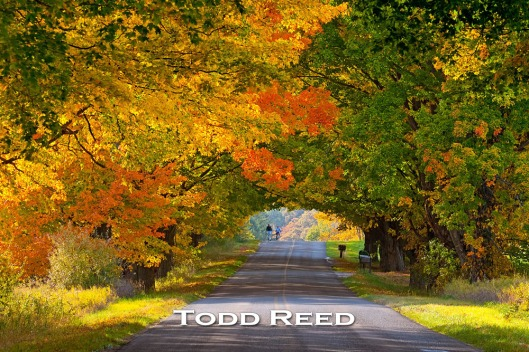 283A_Todd-Reed_Day-283-of-365-October-10_2010
