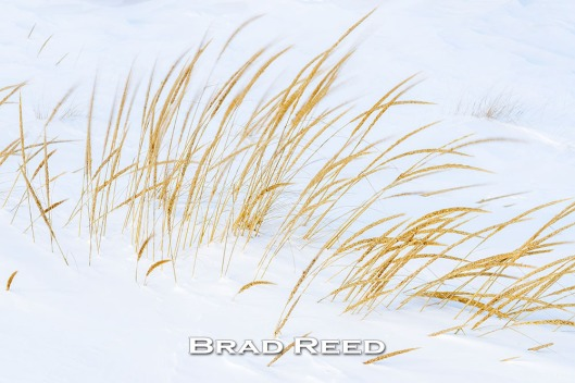 48B_Brad Reed_2071_January 29_2014_Ludington City Beach Grass_1000px_facebook