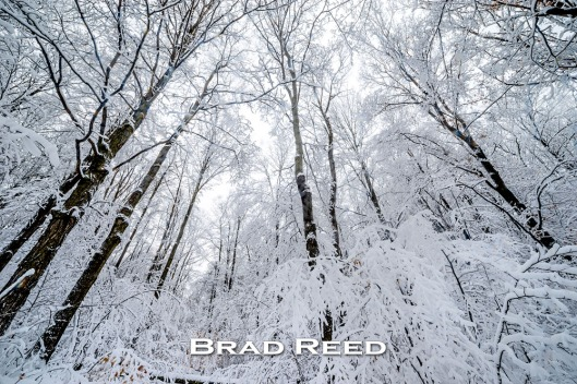 Brad Reed_6096_Wednesday_December 17_2014_Facebook